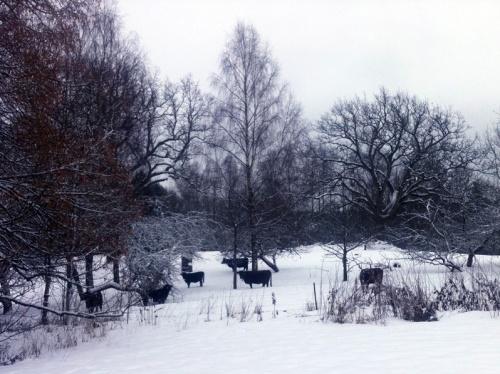 vinterkuer